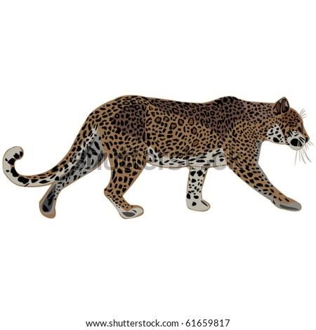 Leopard is beautiful big cats. - stock vector