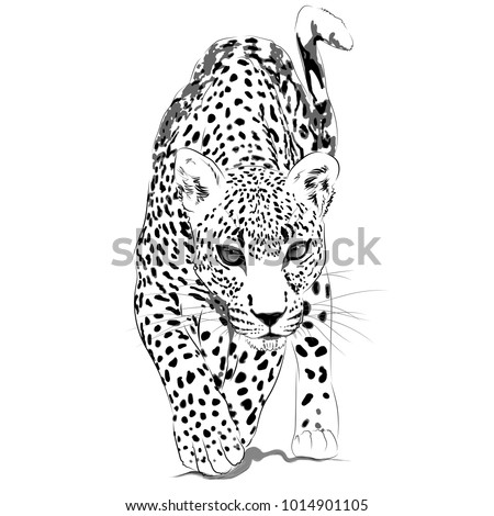 Leopard monochrome illustration