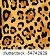 Leopard skin texture - stock
