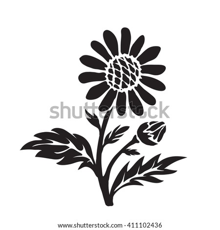 Leucanthemum (oxeye daisy) silhouette, hand drawn vector