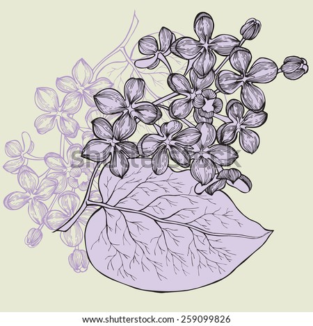 Lilac branch, hand-drawing. Vector illustration. - stock vector