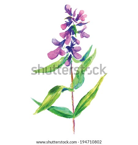 Lilac flower. Vector floral illustration. - stock vector