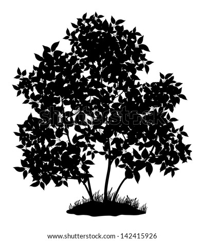 Lilac tree with leaves and grass, black silhouette on white background. Vector - stock vector