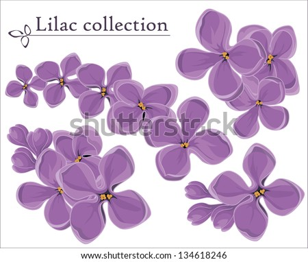 Lilac vector collection.  Spring decoration element. - stock vector