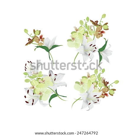Lilies and tiger orchids bouquet vector design elements - stock vector