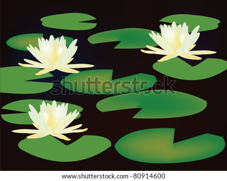 lilies on black water - stock vector
