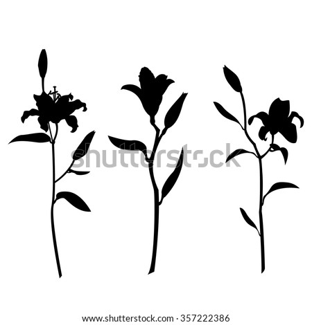 Lily flowers silhouette