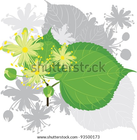 Linden flowers with leafs, blooming tree - stock vector