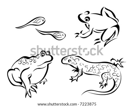 line art vector animal series amphibians