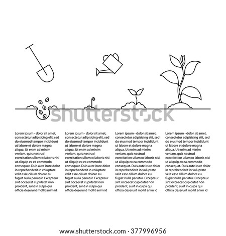 Line sprout and plant growing. Linear nature leaf, grow tree, garden and flower, organic gardening, eco flora. Timeline infographic of planting tree process, business concept flat design. - stock vector