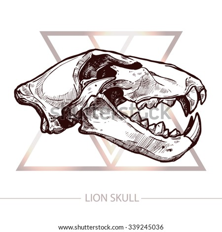 Lion Skull. Trendy T-Shirt Print With Lion Skull - stock vector
