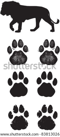 Lion Tracks or Spoor - stock vector