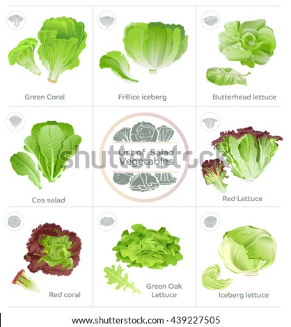 Jen Allen Ethnocultural Crop Ipm further Changing Agriculture Through Hydroponics further Our Produce moreover White Fruits And Vegetables likewise 330932605347. on growing choy sum