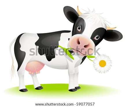 Little black and white cow eating daisy - stock vector