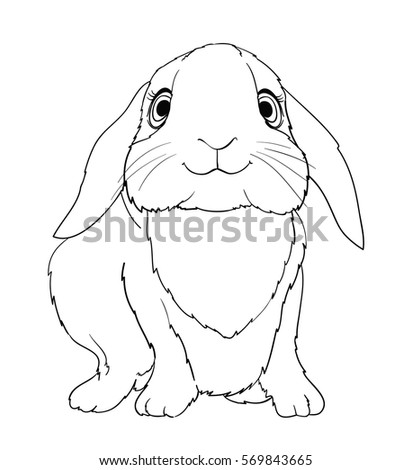 Little Cute Rabbit Coloring Page Version Vector