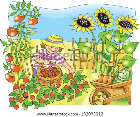 Little farmer boy picking  strawberry in the garden