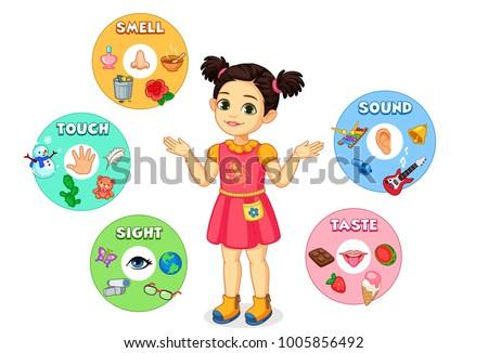 little girl showing five senses chart stock vector