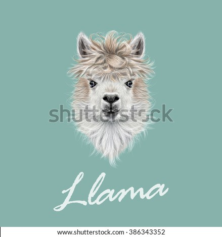 Llama animal portrait. Vector illustrated portrait of Llama or Alpaca on blue background. - stock vector