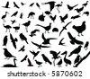 Lots of birds vectors silhouette - stock vector