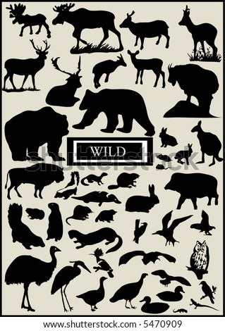 lots of wild forest animal vector