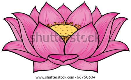 Lotus flower - stock vector