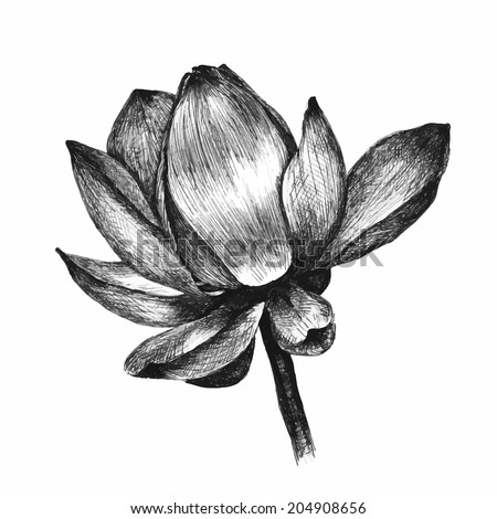 Lotus flower isolated on white. Hand drawn sketch. Vector illustration - stock vector