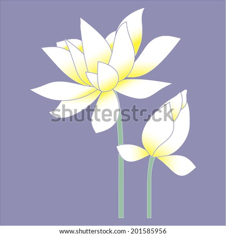 Lotus flower or Water lily. Color vector illustration. - stock vector
