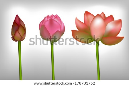 Lotus realistic flowers, vector - stock vector