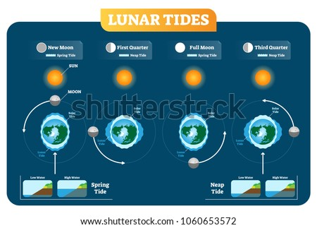 Lunar Solar Tides Vector Illustration Diagram Stock Vector Royalty
