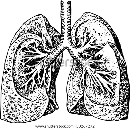 lung - stock vector