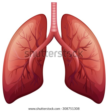 Lung cancer diagram detail illustration stock vector 308751308 lung cancer diagram in detail illustration ccuart Image collections