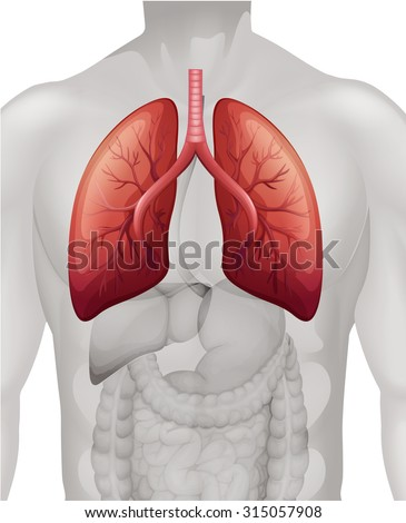 Lung Cancer Diagram Human Illustration Stock Vector HD (Royalty Free ...