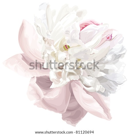 Luxurious white peony flower painted in pastel colors - stock vector