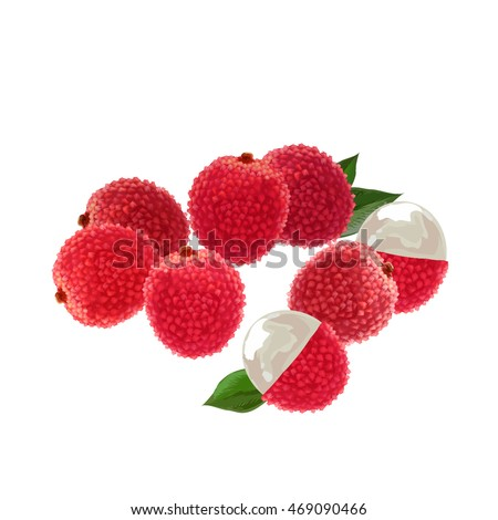 lychee. lychee vector illustration. lychee fruit pattern.