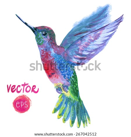 magic vector tropical bird Colibri. watercolor vector illustration blue, red, magenta colorful flying beautiful bird. single element for your floral design.  - stock vector
