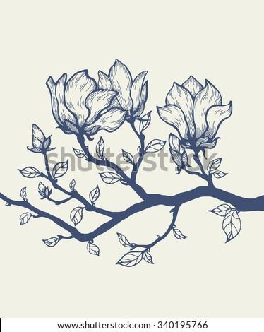 Magnolia blossom tree branch. Floral engraving. Vector flower. Hand drawn artwork. Love bohemia concept for wedding, bridal invitation, card, ticket, branding, boutique logo, label. Dark grey, beige - stock vector