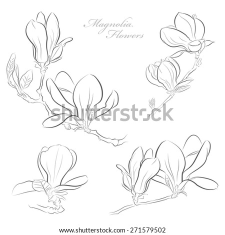 Magnolia flowers - stock vector
