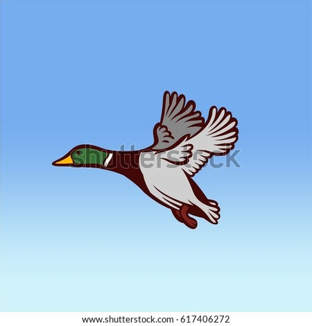mallard duck flying on the sky