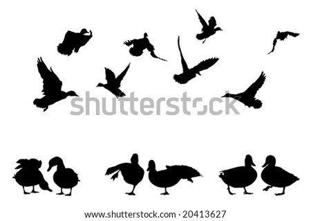 mallard duck silhouettes collection