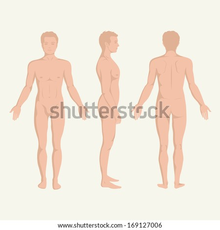 man body anatomy, front, back and side standing vector human poses  - stock vector