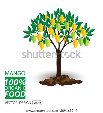 Mango, fruits vector illustration. - stock vector