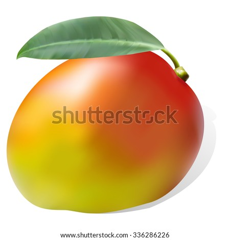 Mango ripe juicy sweet one whole tropical natural healthy exotic fruit with leaf. Vector beautiful closeup side view square colorful food sign, icon isolated on white background.