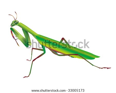 mantis - stock vector