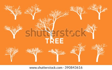 Many branch of trees in Africa