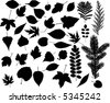 many high detailed leaf vector - stock vector