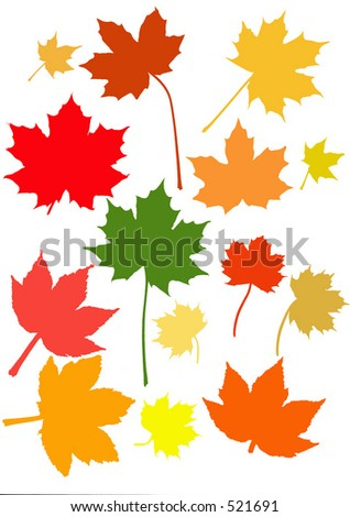 Many maple leaves in their brilliant fall/autumn colors - stock vector