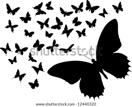 Many silhouettes of different butterflies