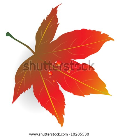 Maple Leaf illustration with water droplets. Colored in fall hues. Available in vector.