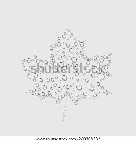 maple leave sign, Transparent water drop vector - stock vector