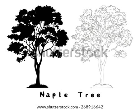 Maple Tree with Leaves and Grass Black Silhouette, Contours and Inscriptions Isolated on White Background. Vector - stock vector